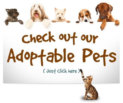 Adoptable Pets Page
