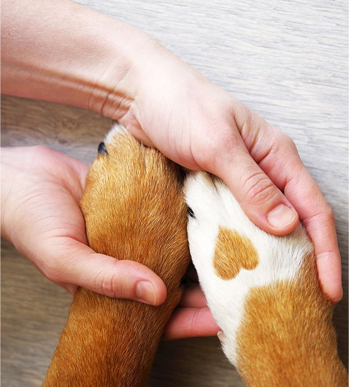 WOmans hands holding a dogs paw with a heart on them