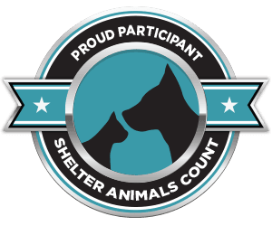 Shelter Animals County Website