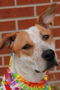 Lucky Dog Program   Hutchinson Animal Shelter, KS